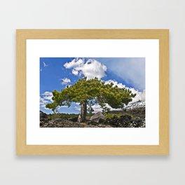 Pine Tree on the Ground of the Mount Etna Framed Art Print