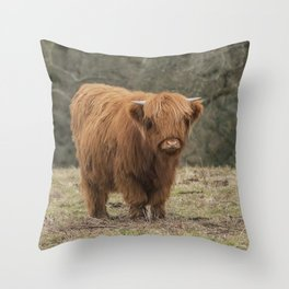 Scottish Highland young cow Throw Pillow