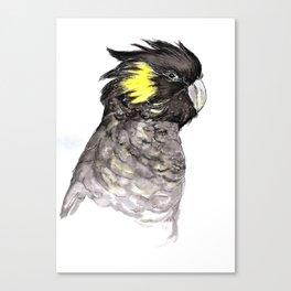 Yellow Tailed Black Cockatoo Canvas Print