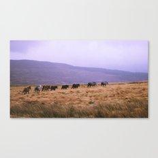 Horse Line Canvas Print