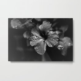 Black & White Hibiscus Metal Print