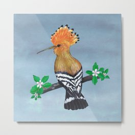 Hoopoe bird Metal Print