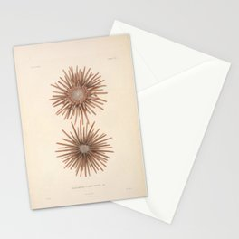 Naturalist Sea Urchins Stationery Cards