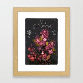 "Botanical illustration ""Malus ola"" Framed Art Print"