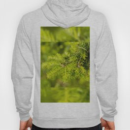 Green coniferous fresh shoots detail Hoody