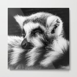 In with the Lemurs Metal Print