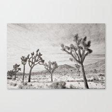 Joshua Tree Park by CREYES Canvas Print