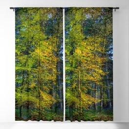Autumnal Woodland Blackout Curtain