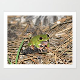 pine barrens treefrog Art Print