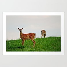 Backyard Deer Art Print