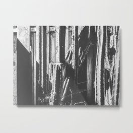 cactus with wooden fence background in black and white Metal Print
