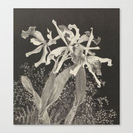 Orchid Flowers Black and White Vintage Print Canvas Print
