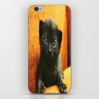 kitten iPhone & iPod Skins featuring kitten by Bar Morrison