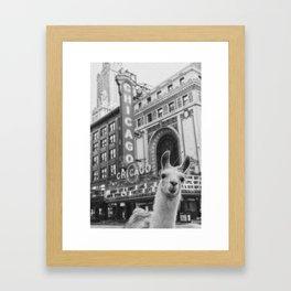 Chicago Llama Framed Art Print