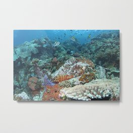 Reef with a redbanded grouper and a school of sergeant fish Metal Print