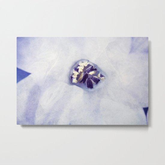 Hyacinth in White Veil Metal Print