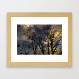 Enchanting Nighttime Trees and Sky Framed Art Print
