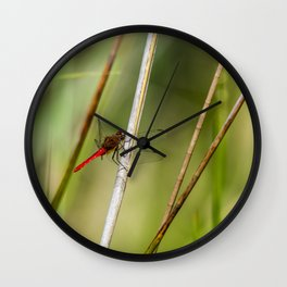 Dragon Fly Resting Wall Clock