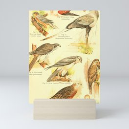 William Playne Pycraft - A Book of Birds (1908) - Plate 7: The Birds of Prey Mini Art Print