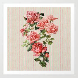 Vintage romantic coral pink roses on watercolor blush sage stripes Art Print