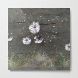 Rustic Barn Wood Series: Dandelion Seeds Fly Away Metal Print