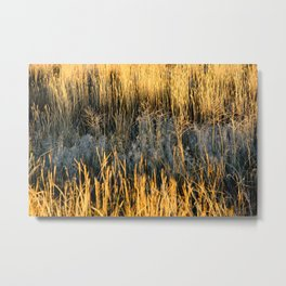 Autumn Wheat Metal Print