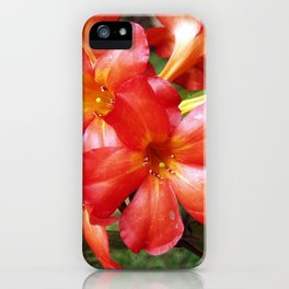 Vireya Flame iPhone Case