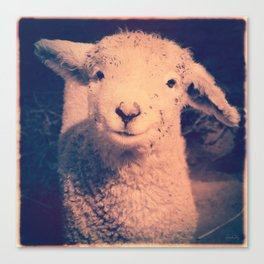 Innocence (Smiling White Baby Sheep) Canvas Print