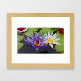 Loving Lotuses Framed Art Print