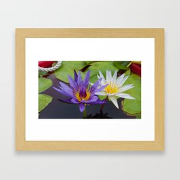 Loving Lotuses Framed Art Print