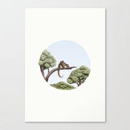 Common Ringtail Possum (Pseudocheirus peregrinus) Canvas Print