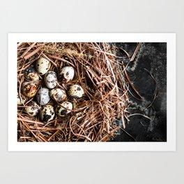 Fresh Quail Eggs in Nest Art Print