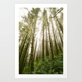 Forest // Light Art Print