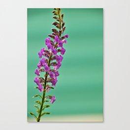 tall & proud Canvas Print