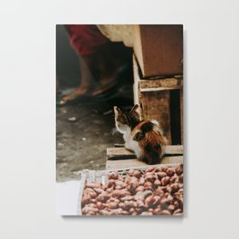 Cat by Fiona Smallwood Metal Print