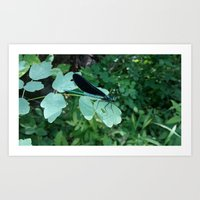 Calopteryx Maculata Art Print