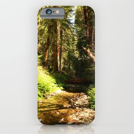 A Muir Woods Scene iPhone Case