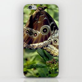 Butterfly Hang iPhone Skin