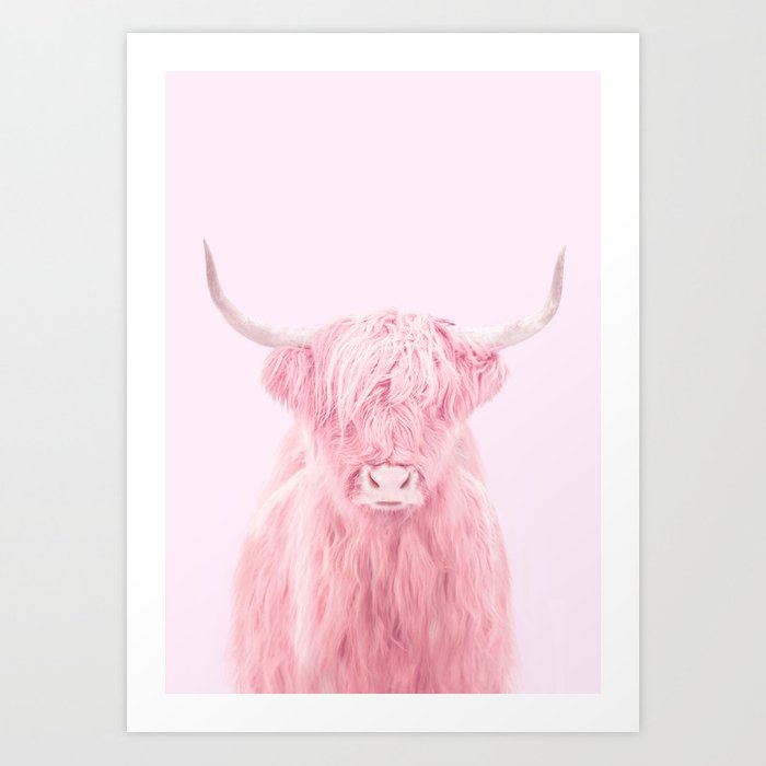HIGHLAND COW Kunstdrucke