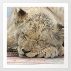 Lion_2014_1202 Art Print