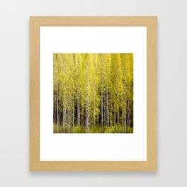 Lovely spring atmosphere - vibrant green leaves on the trees - beautiful birch grove Framed Art Print
