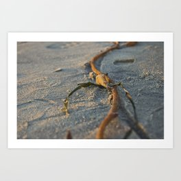 Coronado Seaweed Art Print