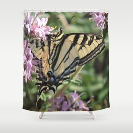 Western Tiger Swallowtail on Lemon Blossoms Shower Curtain