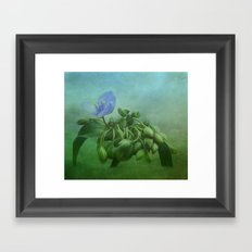 Spiderwort Framed Art Print