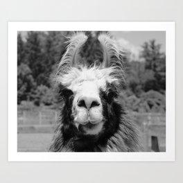 Llama Face Art Print
