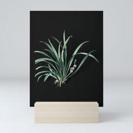 Vintage Sansevieria Carnea Botanical Illustration on Black (Portrait) Mini Art Print