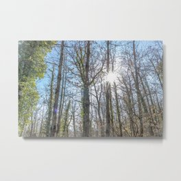 Sunrays on the forest Metal Print
