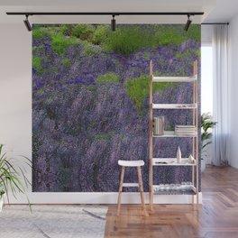 Lavender Fields Wall Mural