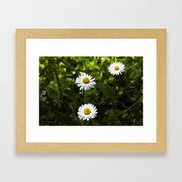 daisy flower Framed Art Print