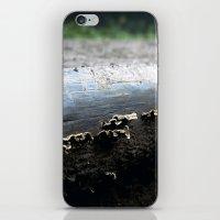mushrooms iPhone & iPod Skins featuring mushrooms by nast